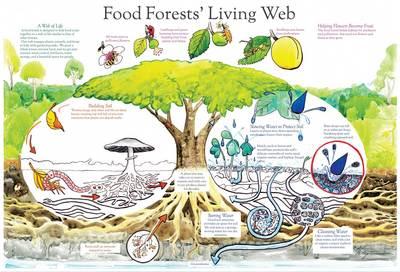 Food-Forests-Living-poster.jpg